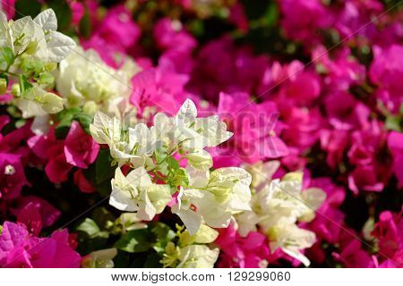Lush blooming flower with colorful mix of summer flowers.