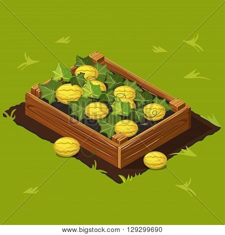 Vegetable Garden Wooden Box with Melons. Set 6
