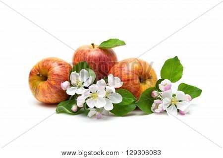 ripe apples and apple flowers on a white background. horizontal photo.