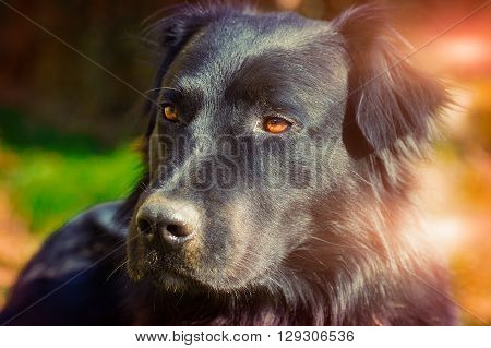 particular of young black dog in a sunny day