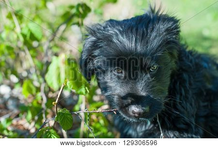 particular of young black dog in the nature