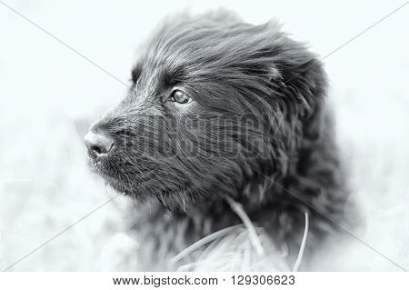particular of young black dog with black and white tecnique