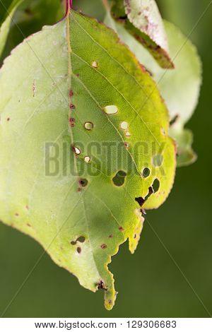 plants disease mildew pest parasite close up