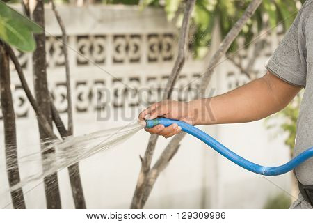 The gardener was watering the plants in the garden. Using hands squeeze the blue water pipe water to water the plants. ** Note: Soft Focus at 100%, best at smaller sizes