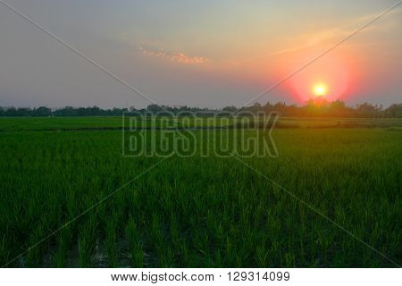 Sunset Sunset amid rice fields in northern Thailand .