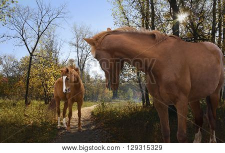 a pair of horses on an autumn walk in the beautiful woods