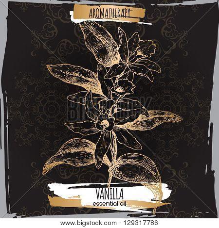 Vanilla planifolia aka Vanilla sketch on elegant black lace background. Aromatherapy series. Great for traditional medicine, perfume design, cooking or gardening.