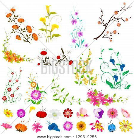 vector illustration of collection of colorful flowers