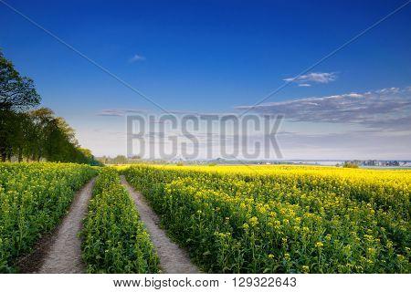 The road leading through the rape fields. May 2016. Masuria Poland.