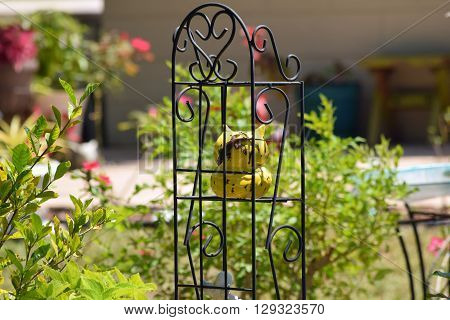 Metal Plant Stand with yellow jug which hid lizard. Decor garden