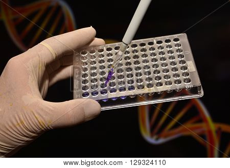 DNA testing in a scientific laboratory. The study of biological sample in a well plate.