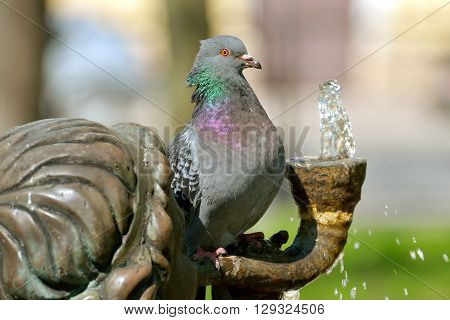 The dove flew to the fountain to get a drink of water from it to quench the thirst.