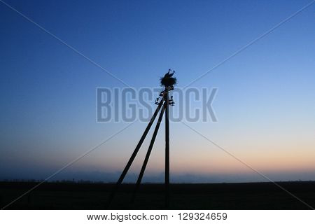 Field and storks in the nest at night
