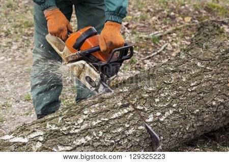 chainsaw in a hand of the lumberjack