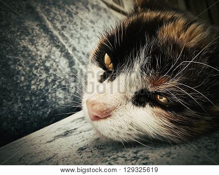 close-up illustration of adorable cat lays on sofa. Oil paint filter