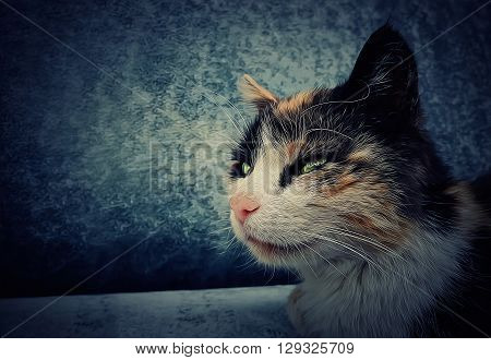 Portrait illustration of a laying cat looking forward. Oil paint filter