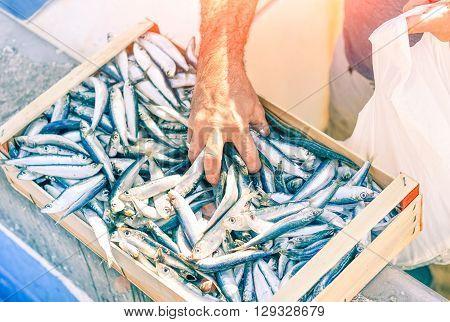 Fisherman hand catching fresh sardine fish from box at harbour market - Man selling pilchard from the fishing boat at port dock