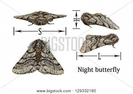 Scheme size night butterfly on white background