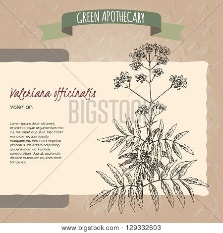 Valeriana officinalis aka Valerian sketch. Green apothecary series. Great for traditional medicine, or gardening.