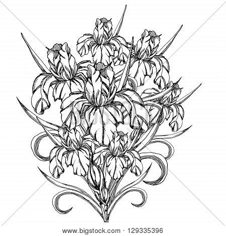 Sketch flowerctor decorative vector photo bigstock sketch flowerctor decorative trace of iris flowerstemplate for coloring pages for adults pronofoot35fo Image collections