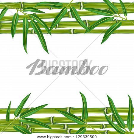Background with bamboo plants and leaves. Image for holiday invitations, greeting cards, posters, advertising booklets, banners, flayers.