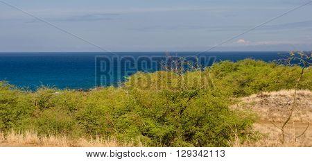 Bushes Near Hapuna Beach