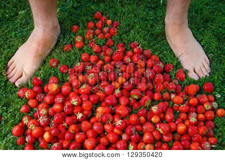Ripe strawberries on the lawn next to her bare feet of man