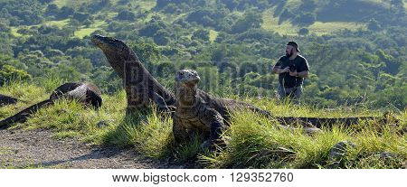 RINCA ISLAND INDONESIA - MARCH 04:The photographers and Komodo Dragons on island Rinca.The Komodo dragon Varanus komodoensis is the biggest living lizard in the world Indonesia.04 March 2016
