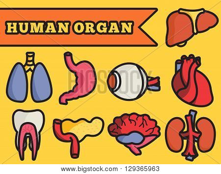 Set Flat Human Organs Icons Illustration Concept. Vector Backgro