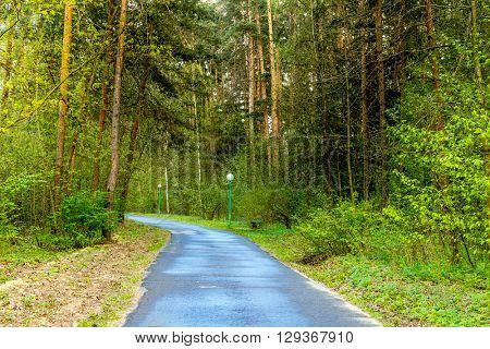 path between pine trees in park, outdoor summer picture