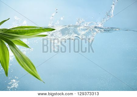 Fresh bamboo leaf in water