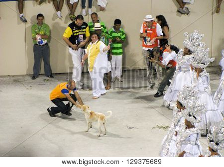 Rio de Janeiro Brazil - February 23: a dog got into the Samba Parade during the annual Carnival in Rio de Janeiro on February 23 2009