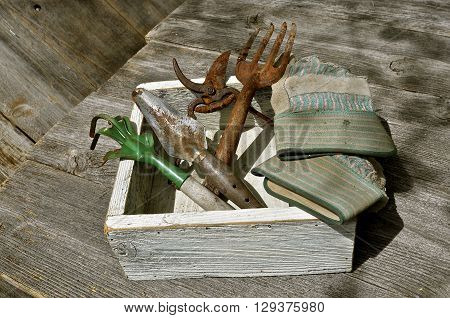 In a white wooden storage box are old rusty garden tools and a ragged pair of gloves.