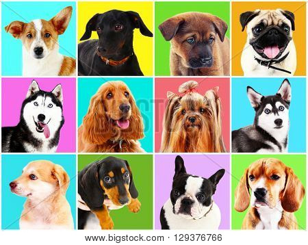Dogs portraits on bright backgrounds