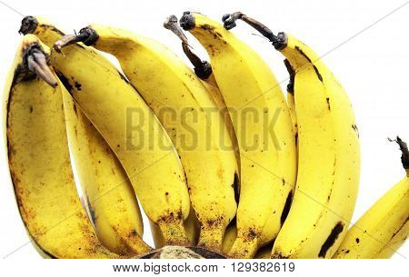 Close up of Lebmuernang banana or slim yellow bunch of Bananas, Lady finger banana, isolated on white background.
