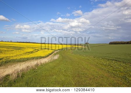 a countryside bridleway winding through agricultural scenery in the yorkshire wolds england with wheat and oilseed rape crops under a blue sky in springtime