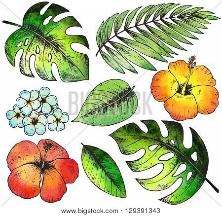 Set of colorful hand drawn tropical plants and flowers with watercolor texture. Summer hawaiian vector illustration.