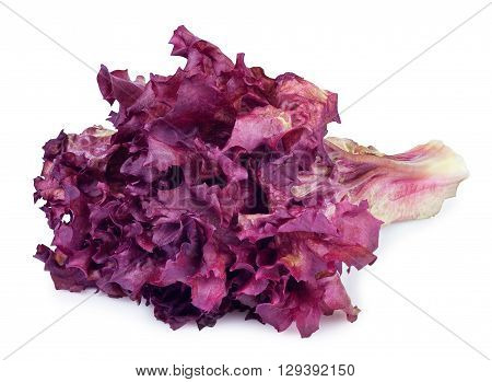 sheaf of purple lettuce isolate. Fresh purple vegetable salad Lollo Rosso