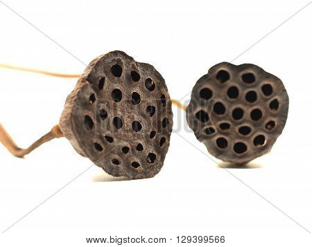 Select focus lotus seeds isolated on white background