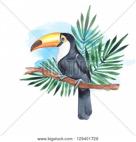 Toucan on branch. Hand-drawn bird.  Watercolor illustration 4