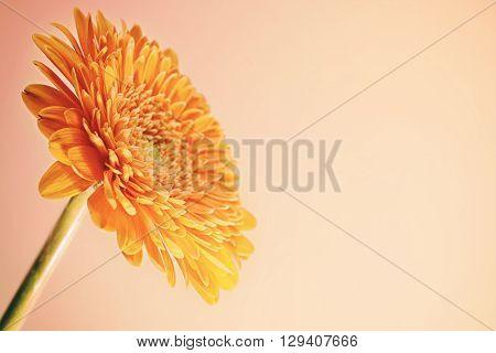Greeting Card With Orange Gerbera Flower