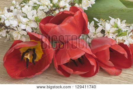 Spring bouquet from red tulip and white flower to cherries