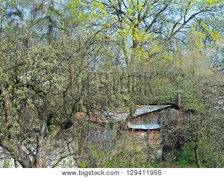 Shed in the backyard surrounded by plants at spring