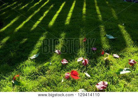 Beautiful green grass texture in garden