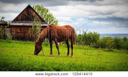 Horse grazing in the pasture nature landscape