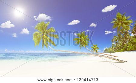 Scenic Sea Shore White Sand Coconut Palm Trees Concept