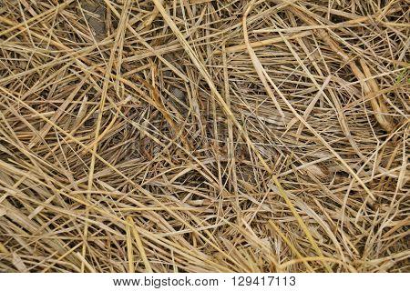 Texture hay closeup