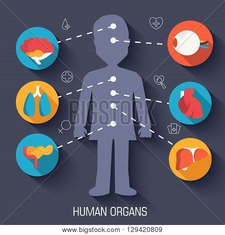 Set Flat Human Organs Icons Illustration Infographic Concept. Vector Background Design. Template For