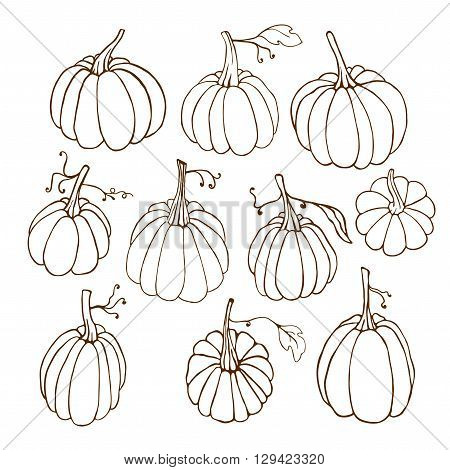 Isolated contour pumpkins on white background. Set of hand drawn pumpkins. Pumpkin collection. Vector pumpkin design element.