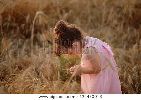 little girl in a pink dress leaned over wheat spikelets. Golden color